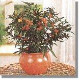Giftige zimmerpflanzen - Giftige zimmerpflanzen fur kinder ...